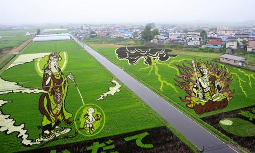 1.300 nông dân cấy lúa, dệt thành tranh ở Nhật