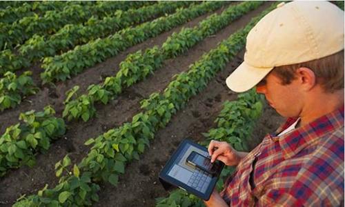 Cô gái 19 tuổi lập mạng xã hội kết nối 6.700 nông dân Columbia