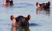 Thủ phạm thải phân khiến cá chết ngạt ở châu Phi
