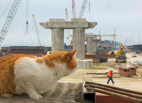 Chú mèo nổi tiếng hơn Putin trong lễ khánh thành cây cầu nối Crimea - ảnh 2