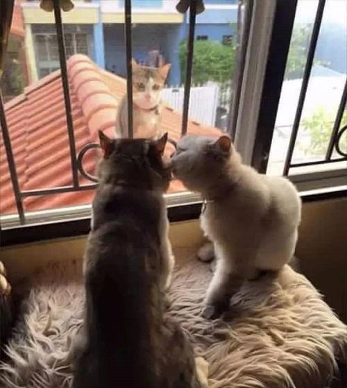 Một mèo đi với một mèo, một mèo đứng đó buồn thiu một mình.