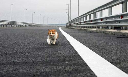 Chú mèo nổi tiếng hơn Putin trong lễ khánh thành cây cầu nối Crimea - ảnh 1