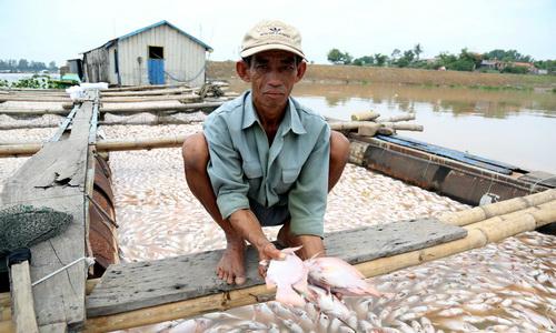 Công an điều tra việc hơn 1.500 tấn cá chết trên sông La Ngà -