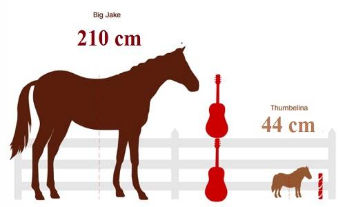 So sánh chiều cao của Big Jake và Thumbelina. Ảnh: CNN.