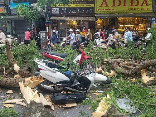 Cây phượng cổ thụ đổ trúng hai xe máy trên phố, 5 người bị thương