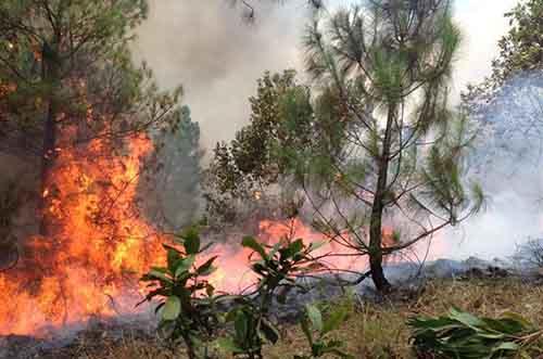 Đám cháy rừng thông tại địa bàn giáp ranh địa bàn huyện Đô Lương và Yên Thành. Ảnh: Huy Thư.