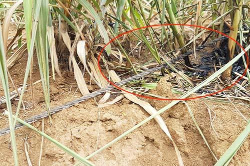 Một sợi dây điện (khoanh đỏ) đứt rơi xuống đất tại hiện trường vụ tai nạn. Ảnh: HB.