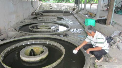 Lão nông vay 10 tỷ đồng đào ao thả cá giống