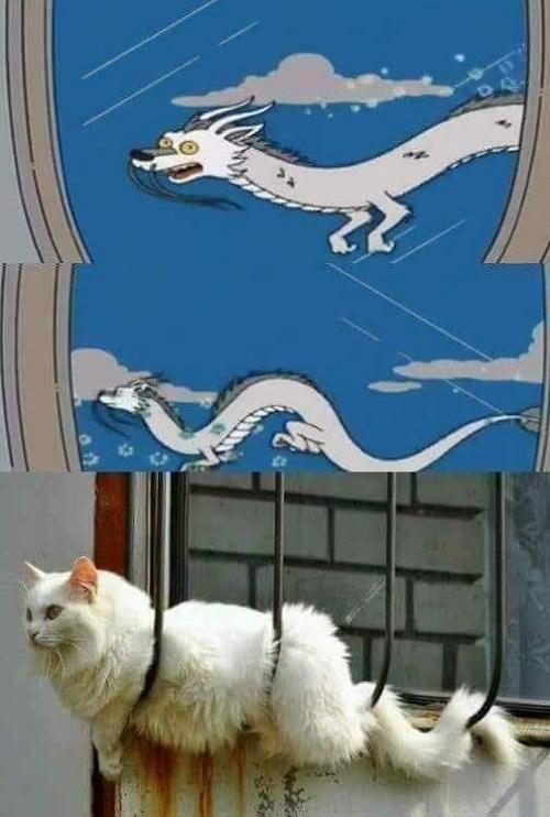 Mèo có quan hệ họ hàng với rồng.