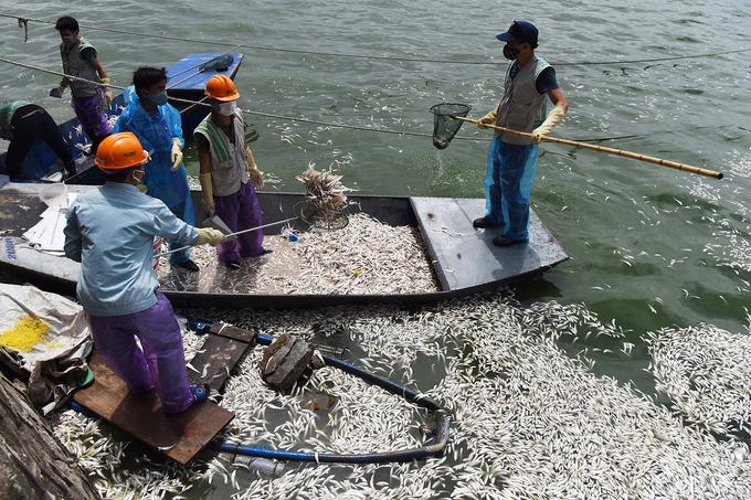 Gần 100 người đang vớt cá chết ở hồ Tây