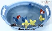 Thí nghiệm hoa giấy bung nở trên mặt nước