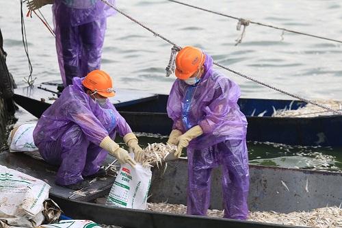 Lực lượng công nhân đã vớt được hơn 20 tấn cá. Ảnh: Gia Chính