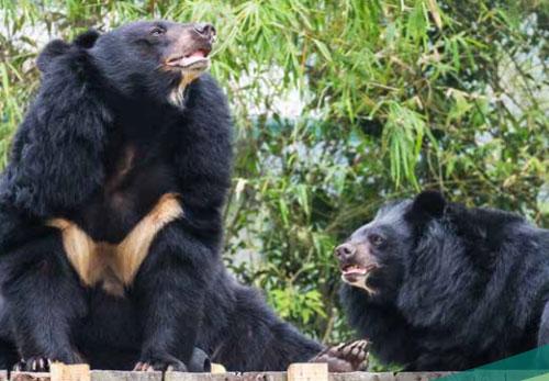 Giới thiệu nhiều cây thuốc có tác dụng thay thế mật gấu