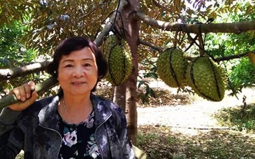Vườn sầu riêng hạt lép, cơm vàng của bà Nguyễn Thị Kim Mai ở Đồng Nai. Ảnh: NVCC