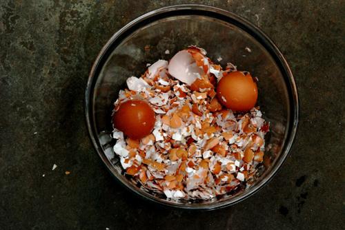 Làm phân bón từ vỏ trứng. Ảnh: thecurtiscasa