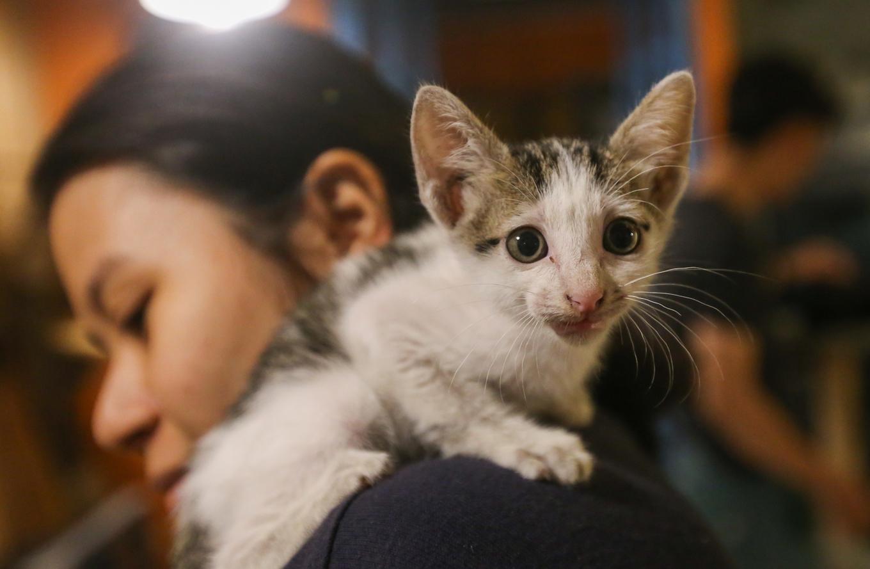 caphemeo 13 1532488593 r 680x0 - Quán cafe nhận nuôi hàng trăm con mèo vô chủ