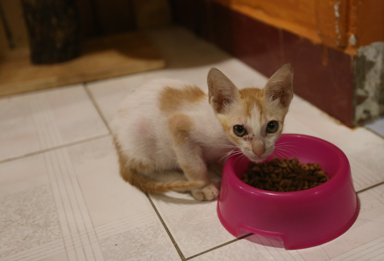 caphemeo 4 1532488572 r 680x0 - Quán cafe nhận nuôi hàng trăm con mèo vô chủ