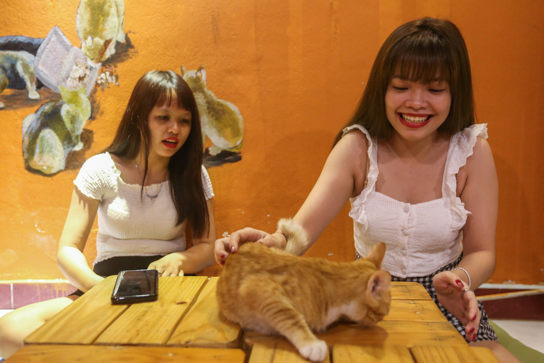 caphemeo 6 1532488576 r 680x0 - Quán cafe nhận nuôi hàng trăm con mèo vô chủ