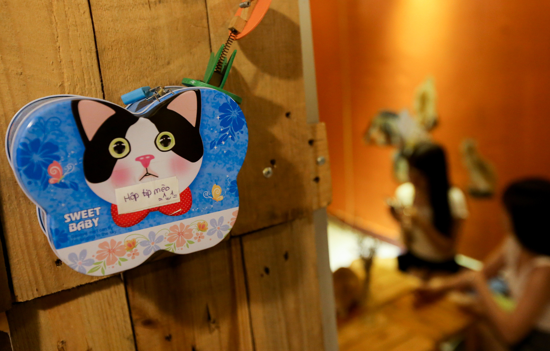 caphemeo 8 1532488580 r 680x0 - Quán cafe nhận nuôi hàng trăm con mèo vô chủ