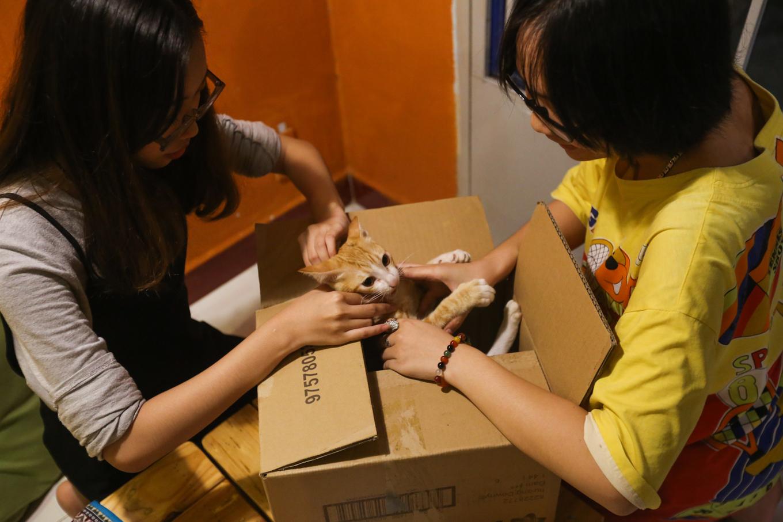 caphemeo 9 1532488582 r 680x0 - Quán cafe nhận nuôi hàng trăm con mèo vô chủ