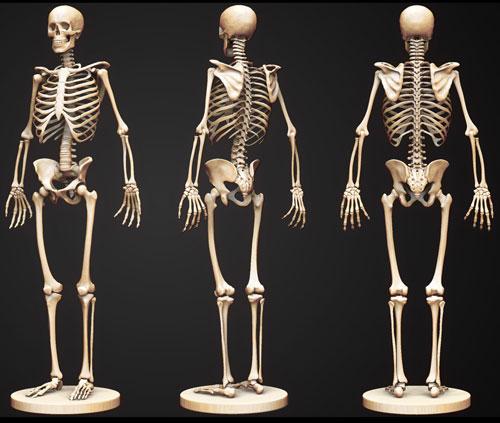 Xương được xem là bộ khung nâng đỡ cơ thể. Ảnh minh họa.