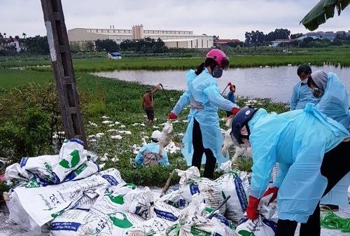 Nhà chức trách huyện An Dương (Hải Phòng) thu gom hơn 10.000 gia cầm tại 2 ổ dịch ở 2 xã An Hưng và An Hồng mang đi tiêu hủy. Ảnh: CTV