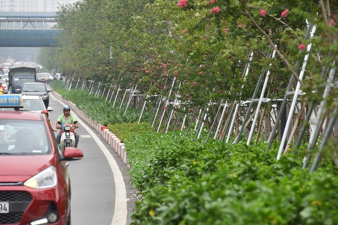 Nhiều cây phong trên phố Hà Nội chuyển sắc đỏ