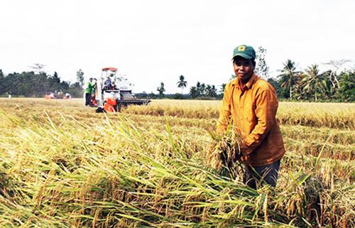 Doanh nghiệp Trung Quốc đến miền Tây tìm nguồn gạo