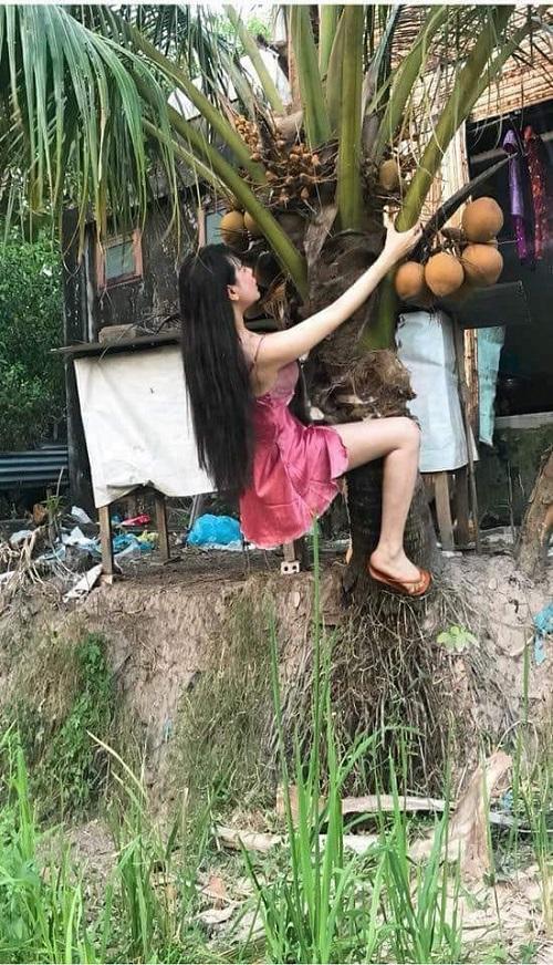 Thôn nữ hái dừa.