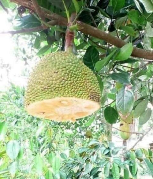 Tên trộm ăn quả nhớ kẻ trồng cây.