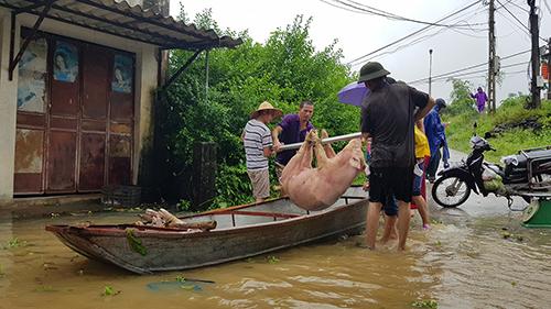 Sáng 18/8, người dân ở Thiệu Dương tiếp tục sơ tán người và tài sản vào vùng nội đê. Ảnh: Lê Hoàng.