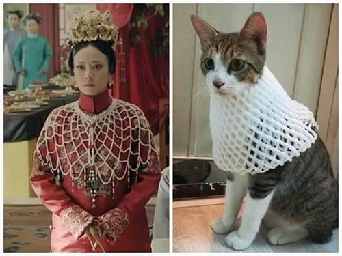 Khi mèo cosplay quý phi.