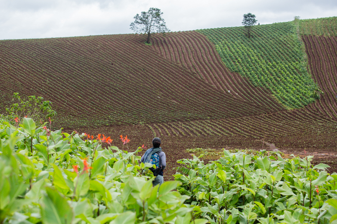 Hành trình leo núi lửa ở Gia Lai ngắm hoa dong riềng bung nở