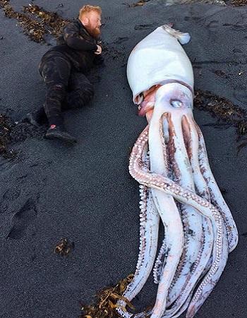 Jack Aplin chụp hình bên xác mực khổng lồ. Ảnh: Facebook.