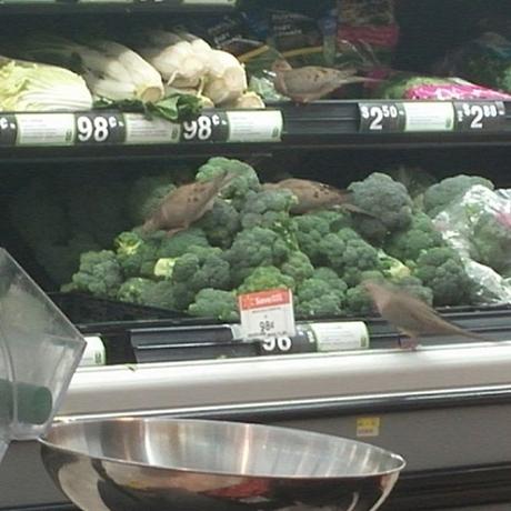 Khi chim cũng đi siêu thị.