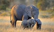 Bài tập tìm từ vựng chỉ voi con, ngựa con trong tiếng Anh