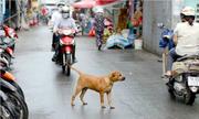 'Muốn chó không bị trộm thì đừng thả rông'