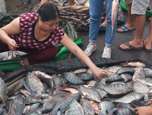 Theo lãnh đạo Công an xã Quy Hồ, sau khi thu gom số cá vào lề đường, nhiều người dân đã muacá giúp tài xế. Ảnh. Xuân Tiến