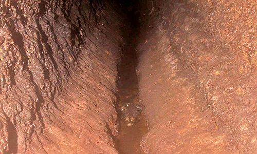Cá sấu màu cam bơi trong phân dơi ở hang Abanda. Ảnh: Ảnh:Olivier Testa.
