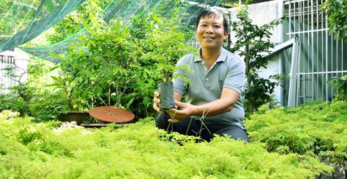 Lãi trăm triệu đồng nhờ trồng cây đinh lăng trong vườn nhà