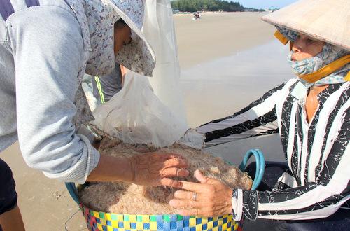 Ruốc dạt vào dày đặc sát bờ biển Vũng Tàu. Ảnh: Nguyễn Khoa