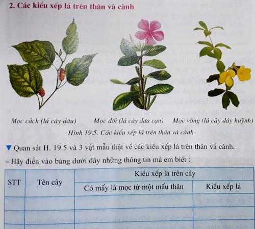 Bài tập in trong sách giáo khoa Sinh học lớp 6 yêu cầu học sinh điền trực tiếp thông tin vào. Ảnh: Quỳnh Trang.