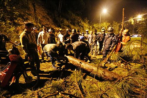 Công nhân công trình đô thị Đà Lạt cắt cây, dọn hiện trường. Ảnh: Duy Khôi.