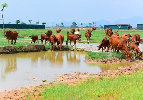 Một dự án chậm triển khai tại huyện Mê Linh. Ảnh: Giang Huy.
