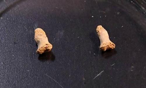 Mẩu xương ngón tay của bé gái trong hang Ciemna. Ảnh: Newsweek.
