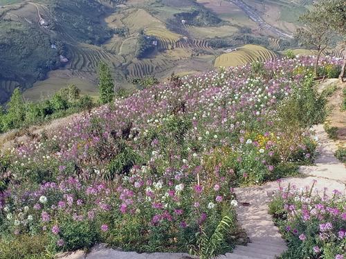 Một số nơi vùng núi phía Bắc nhiệt độ thấp nhất chỉ còn 16 độ C. Ảnh: Giàng A Lù.
