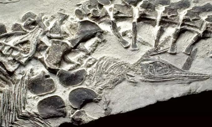 [ẢNH] Những hóa thạch kỳ lạ về loài vật hàng triệu năm trước