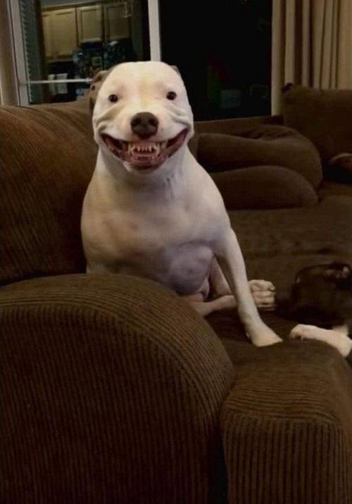 Cười lên đi em, cười hở hàm răng.
