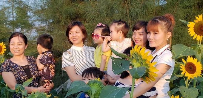 Vườn hướng dương ở Hải Phòng đông nghịt người tới chụp ảnh