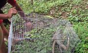 Thấy hai con kỳ đà bị nhốt trong nhà hàng, một người mua thả về rừng
